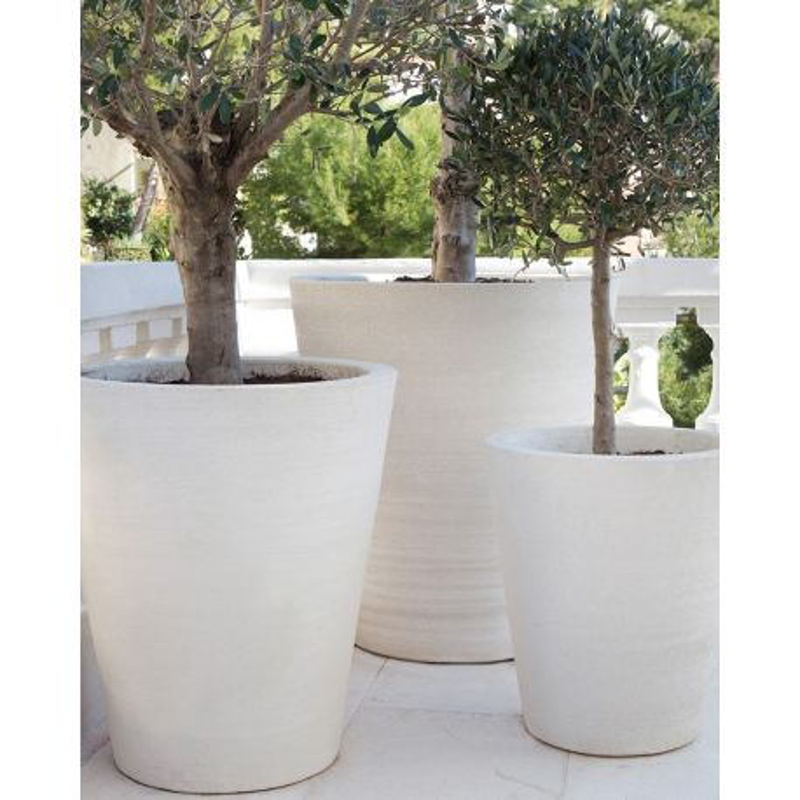 Cycas lisse for Pot exterieur xxl