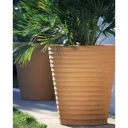 POT CYCAS STRIE